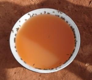 eau saumatre kol